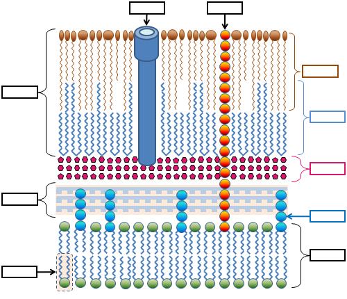 04f la pared celular bacteriana pared de las micobacterias - Quitar gotele de la pared ...